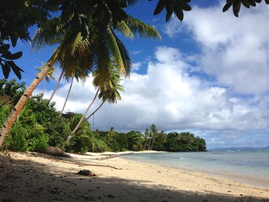 Bamboo Taveuni