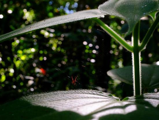 Suital Lodge: Hotel garden