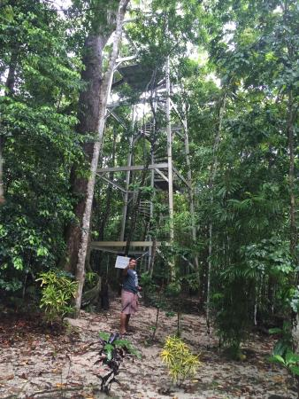Falealupo Canopy Walk: The start of our canopy walk experience