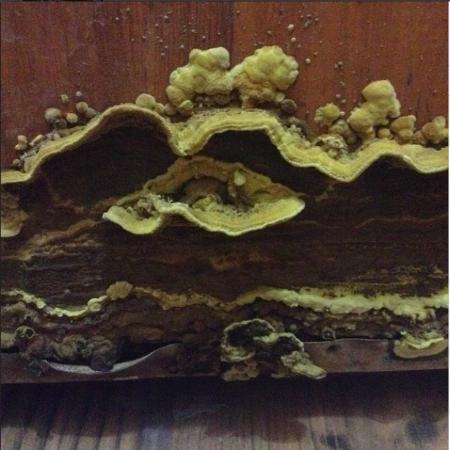 M K P Guest House: Fungus on the inside of our bathroom door