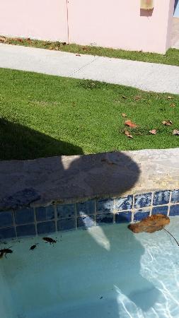 Maunabo, Portorico: Roach