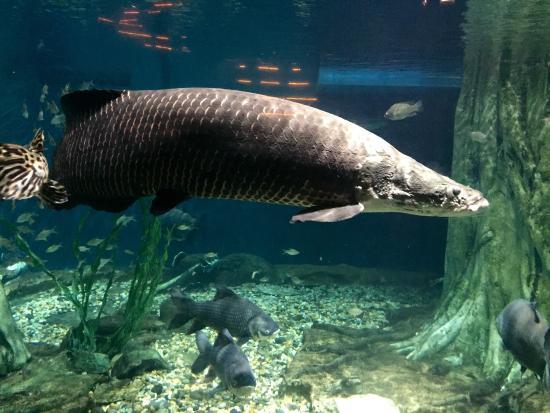 Aquaria klcc picture of aquaria klcc kuala lumpur for Sweet water fish
