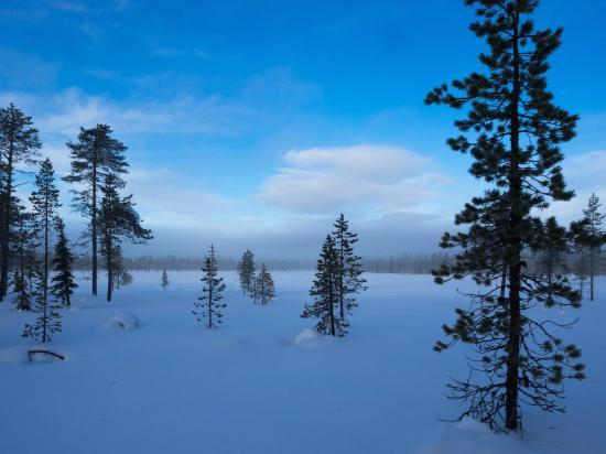 Lapland Safaris: un autre monde