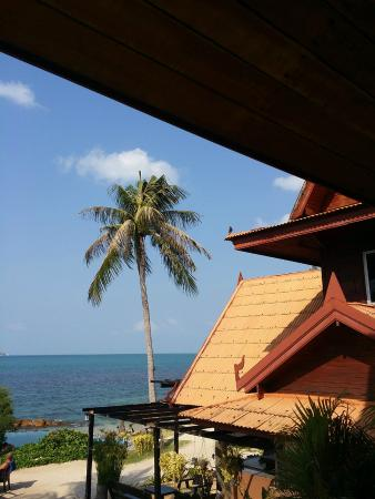 Chills Resort: View! Bird!