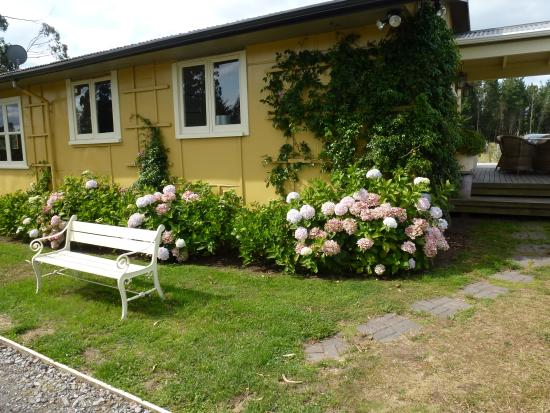 B&B Blossom Cottage: The cottage adorned with blossoms