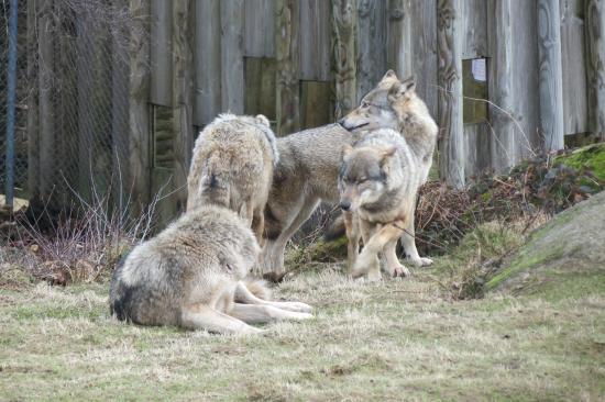 Wolves of Gueret: La meute