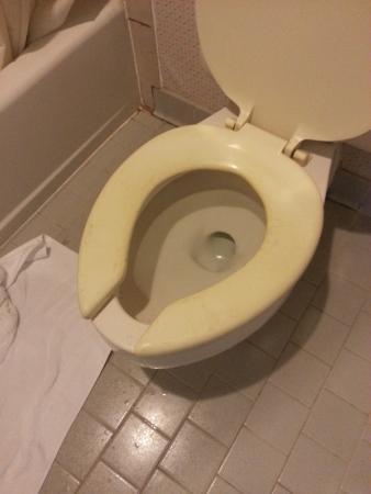 Americas Best Value Inn & Suites: toilet seat