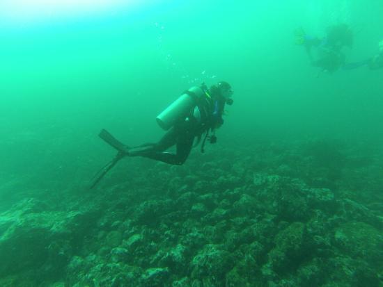 Aquacenter Diving: Diving - Cupcake site