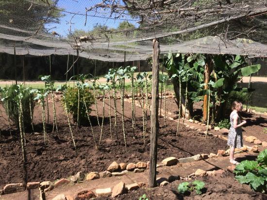 Sekenani Camp: garden