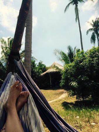 SpicyTao Backpackers: In hammock overlooking the common area