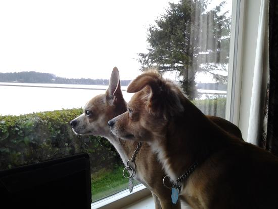 Bay Bridge Motel: dogs enjoying morning view