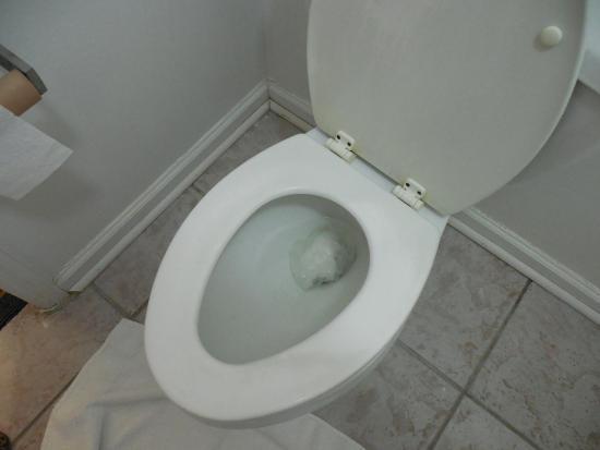 Ashley Lodge: something left in toilet