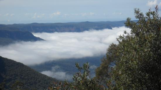 Blue Mountains Canyon and Wildlife Discovery Tour: inversion clouds in Blue Mountains canyon