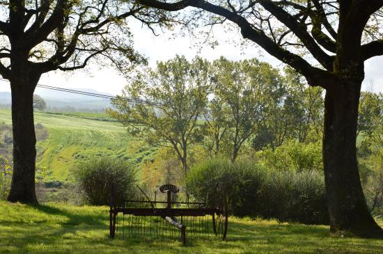 Agriturismo Torrenieri: vista giardino