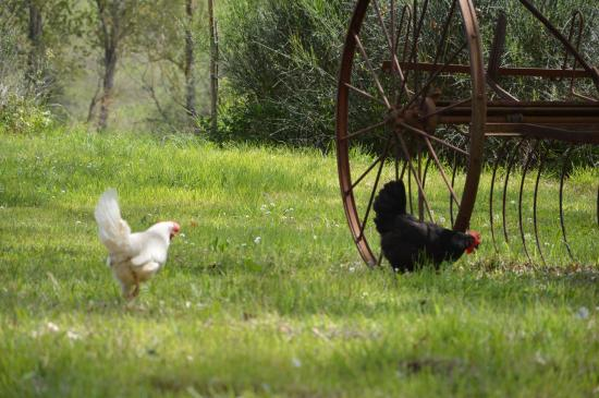 Agriturismo Torrenieri: animali e natura