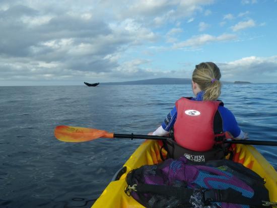 Maui Eco Tours : Amazing experience
