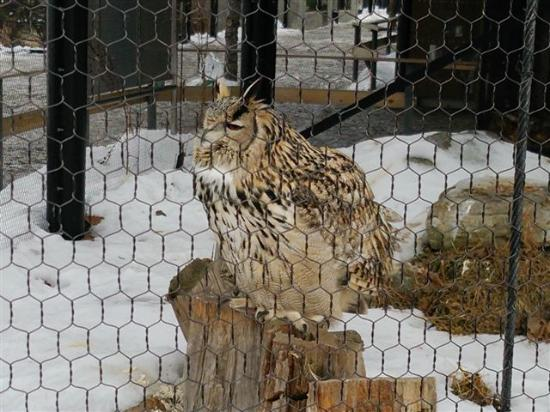 鷲 - Picture of Asahiyama Zoo, Asahikawa - TripAdvisor