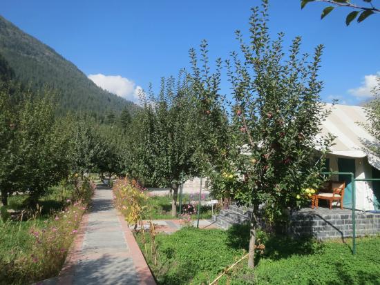 Banjara Camp &  Retreat - Sangla Valley Camp : The Banjara Camp is nestled within an apple orchard.