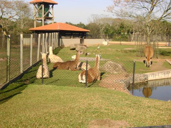 Parque do Iguacu - Zoologico