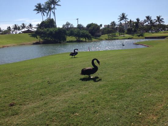 Ko Olina Golf Club: Koolina golf