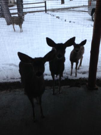 Story Book Cabins: Friendly Deer at the Front Door