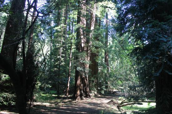 Nature Trip Picture Of Muir Woods National Monument