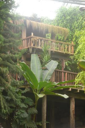 Mondo Verde: Serre tropicale