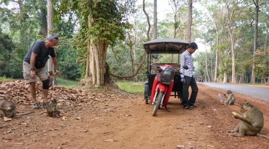 Sunsai Villa: Tuc tuc stop by Monkeys