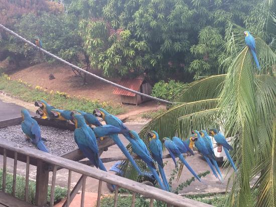 San Jose Island, Panama: Feathered friends