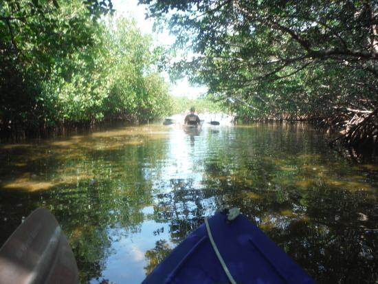 Clearly Unique Charters: Clear bottom kayaking through the mangroves
