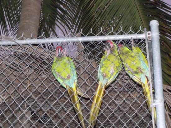 Fajita Republic: petit perroqueten cage pret de la table