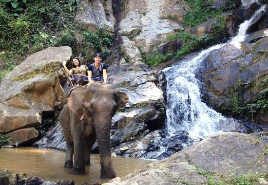 Chiang Mai Elephant Care - Day Tours: Inesquecível