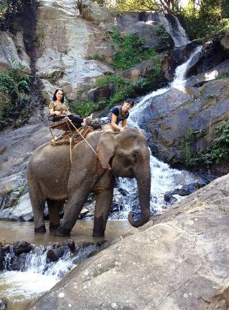 Chiang Mai Elephant Care - Day Tours: Seguro e divertido