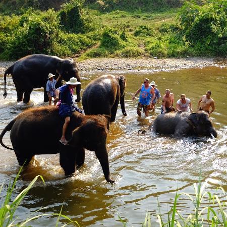 Elephant Life Experience: bathing with elephants