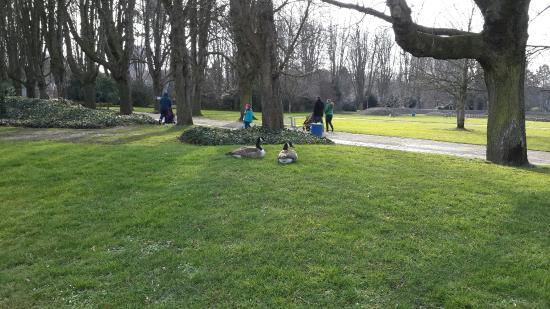 Herzogenriedpark: Ziad