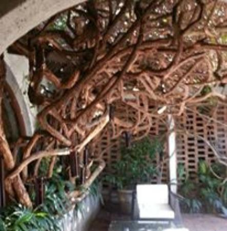 Hotel Casa Naranja: Twisted vines by the courtyard