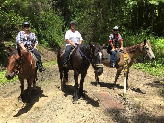 Mooloolah Valley Holiday Houses: our gorgeous horses