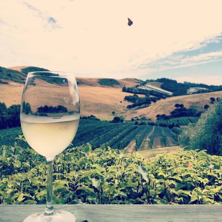 Stonyridge Vineyard : Lovely scenery