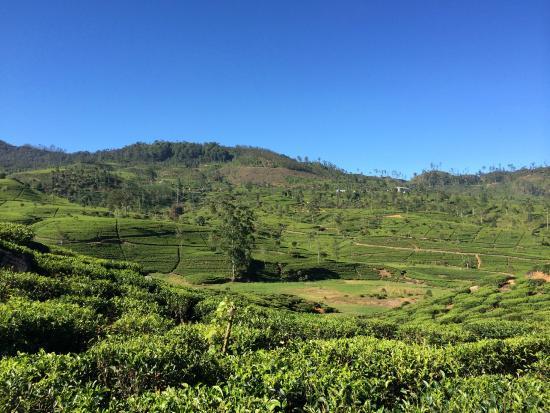 Ceylon Tea Trails: T2 walking trail