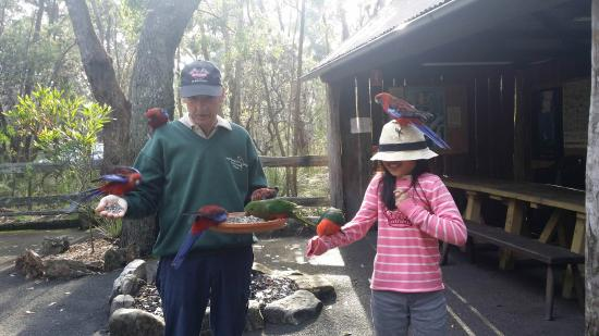 Jemby-Rinjah Eco Lodge : Feeding birds with Terry