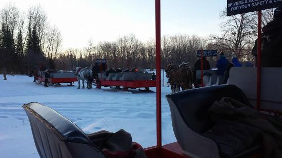 Hillman, MI: Sleighs stopped for elk viewing