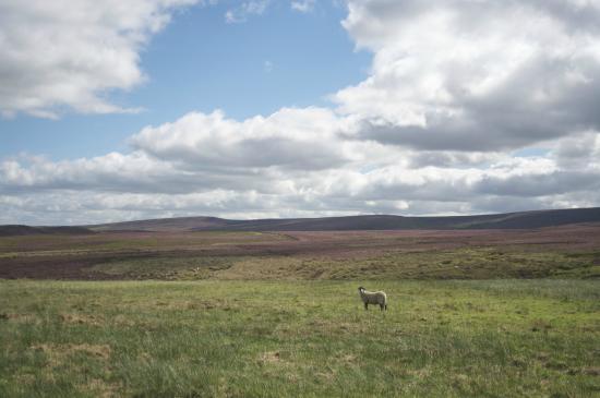 Dog & Partridge Country Inn & Hotel: Moorland