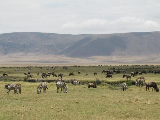 Escarpment Luxury Lodge : Ngorongoro Conservation Area.