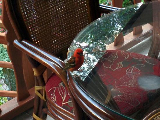 Belle des IIes Hotel: Birdy...