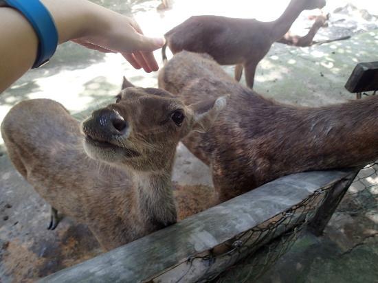 Deerland Park: Oh hello