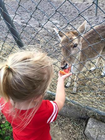 Boyett's Grove : Feeding a baby deer