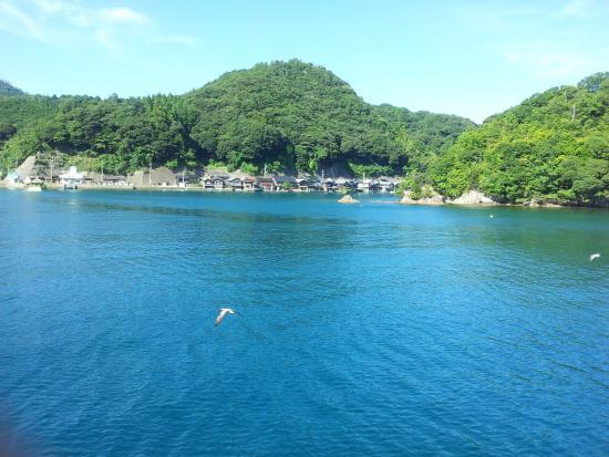 Ine no Funaya: 遊覧船から、カモメと舟屋