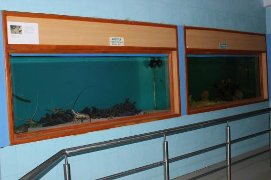 marine fish tanks picture of karwar aquarium karwar tripadvisor