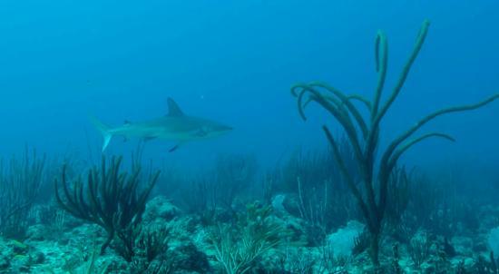 DiveCarib LTD - Day Dives
