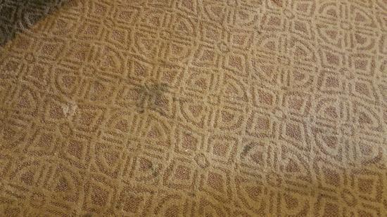 Homewood Suites by Hilton Columbus Hilliard : Stains on floor